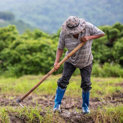 Congresso avalia mercado de carbono verde e futuro do agronegócio