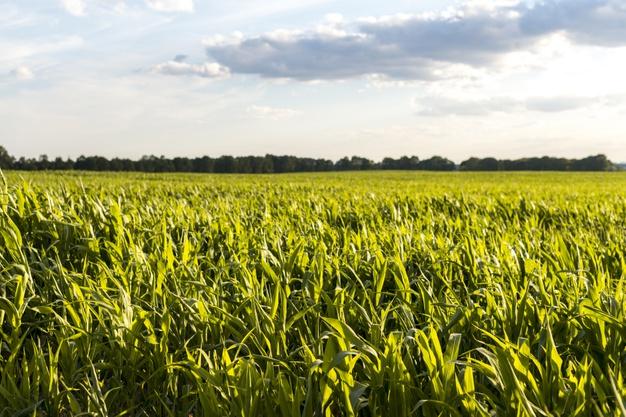 Agrotóxico mais usado no País tem efeitos graves à saúde