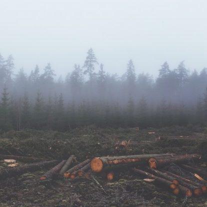 Invasão de florestas públicas impulsiona desmatamento da Amazônia