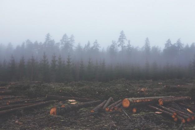 Desmatamento cresce na Amazônia em meio à pandemia