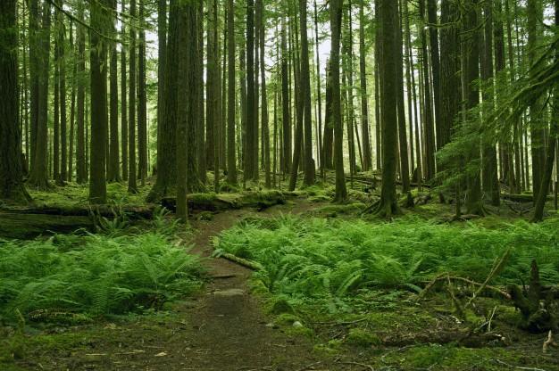 Proteção de florestas é fundamental para salvar biodiversidade
