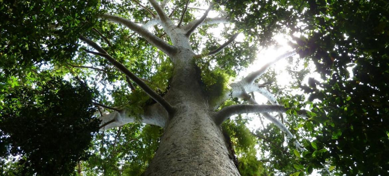 ONU apoia ação para plantar 1 trilhão de árvores e restaurar Mata Atlântica no Brasil