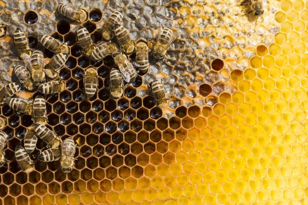 Cemitério de colmeias: agrotóxicos impactam na produção de mel