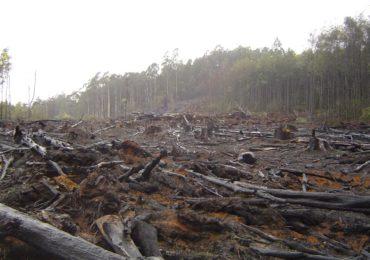 Desmatamento na Amazônia neste ano pode ser maior que em 2019