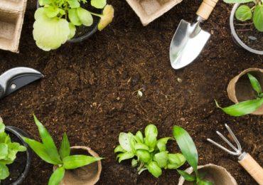 Horta medicinal em casa traz benefícios para corpo e mente