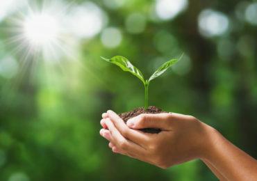 Ação global pretende plantar mais de um trilhão de árvores