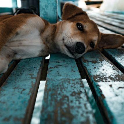 Ação resgata cães da residência de idosa que acumulava animais