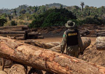 Amazônia tem novo recorde nos alertas de desmatamento