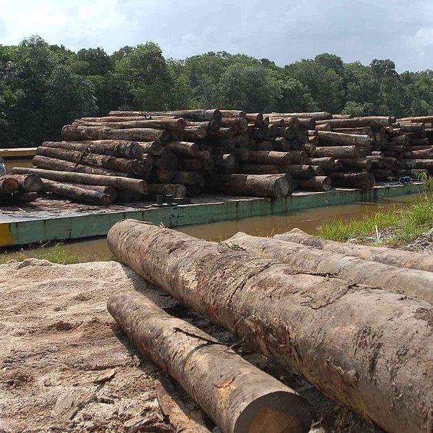 Plano que prevê fim do desmatamento ilegal até 2030 é lançado