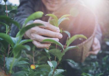 Seguro Rural apresenta crescimento de 30% em 2020