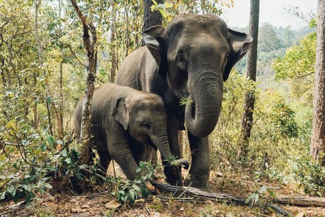 ONU diz que crimes contra vida selvagem ameaçam saúde humana