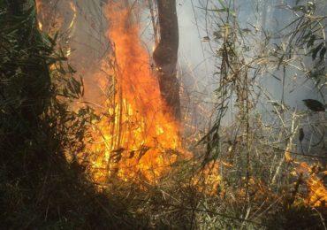"""""""Dia do fogo"""" completa um ano com impunidade dos criminosos"""