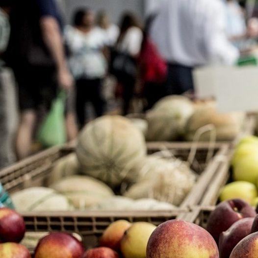FAO usa inteligência artificial para promover segurança alimentar