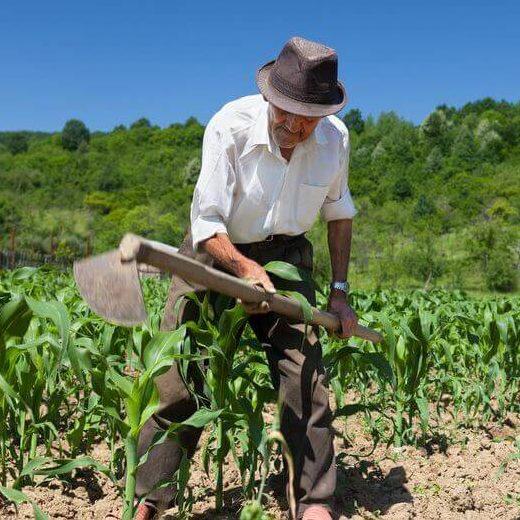 Governo vai comprar R$ 14,7 milhões da agricultura familiar