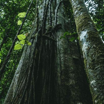 ONU aponta oito mudanças para proteger biodiversidade