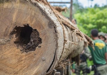 Desmatamento na Amazônia dispara 9,5% em um ano