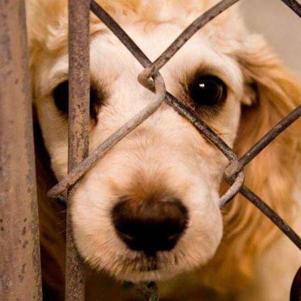Rio endurece regras contra maus-tratos a animais