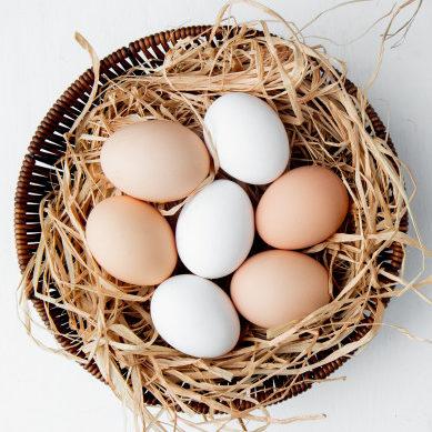 Dia Mundial do Ovo celebra um dos mais populares alimentos