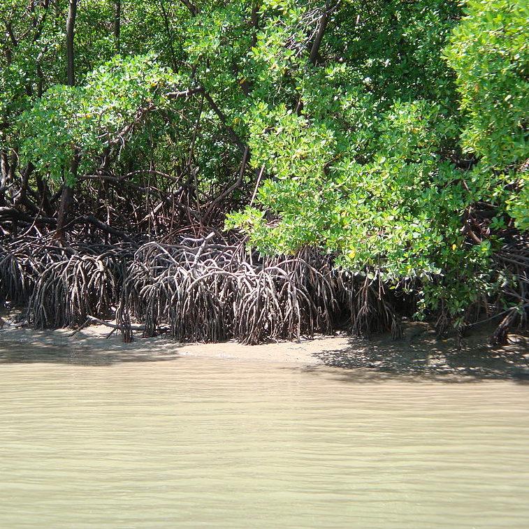 AGU defende no STF decisão do Conama sobre manguezais e restingas
