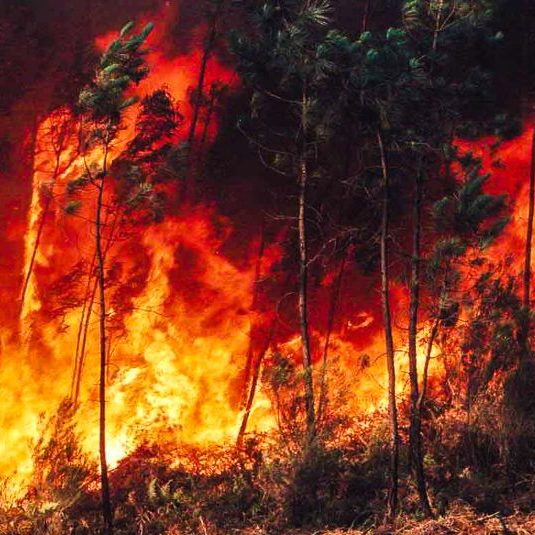 Incêndios florestais aumentam risco de ter doenças respiratórias