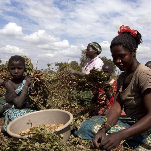 """ONU pede atenção para """"sofrimento desproporcional"""" de mulheres rurais"""