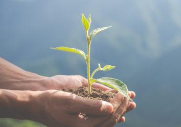 Ações de sustentabilidade crescem em empresas do País