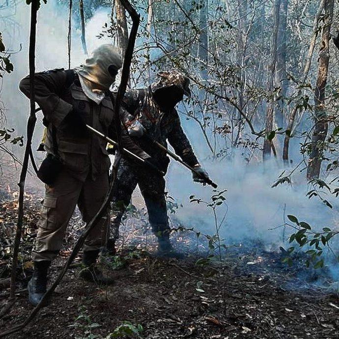Operação combate mais de 15 mil incêndios florestais em 3 meses