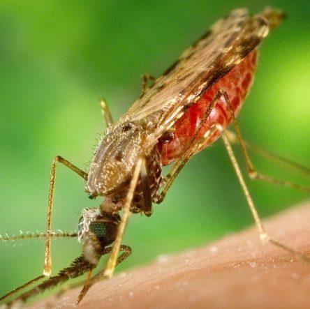 Casos de malária caem 10% no Brasil