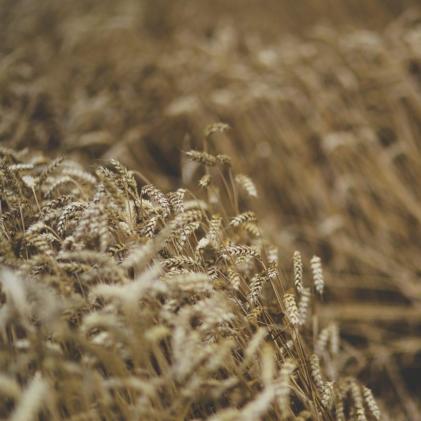Nova ferramenta vai qualificar dados de plantio e coleta de grãos