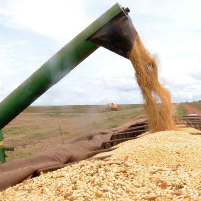 Alta no preço dos grãos impacta produtores de aves e suínos