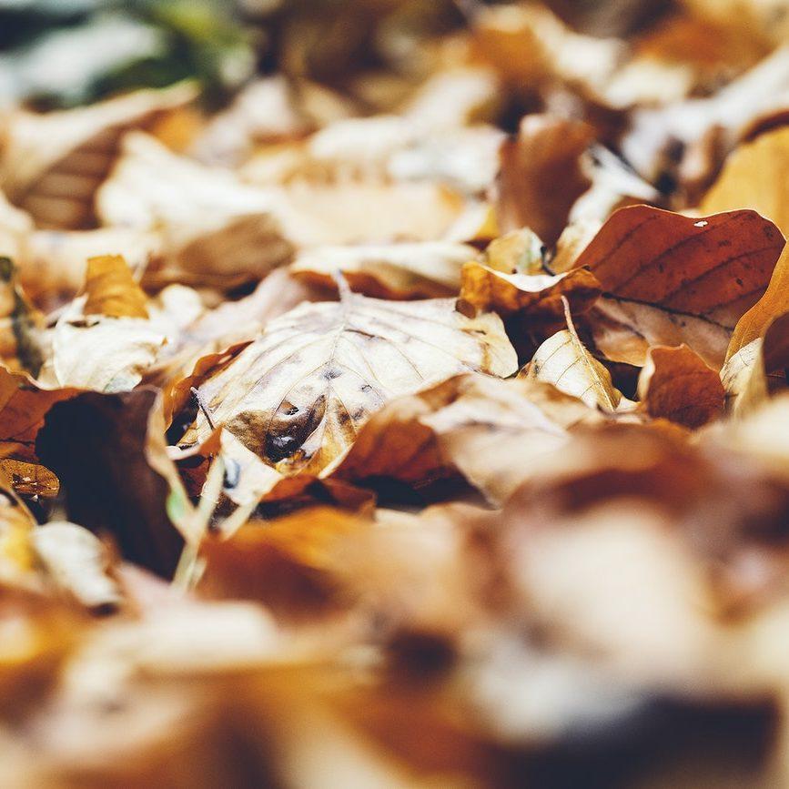 Gotas de Sabedoria: o outono
