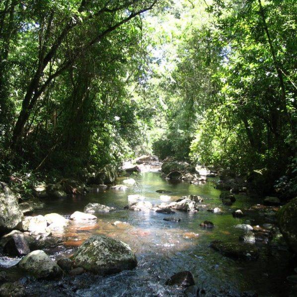 PEC vai retirar proibição de concessão de áreas de conservação