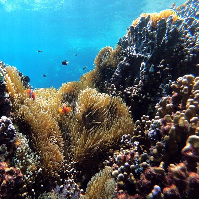 Emissões de CO2 aumentam acidez dos oceanos e ameaçam biodiversidade