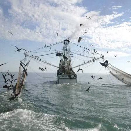 Secretaria volta a proibir pesca de arrasto na costa gaúcha