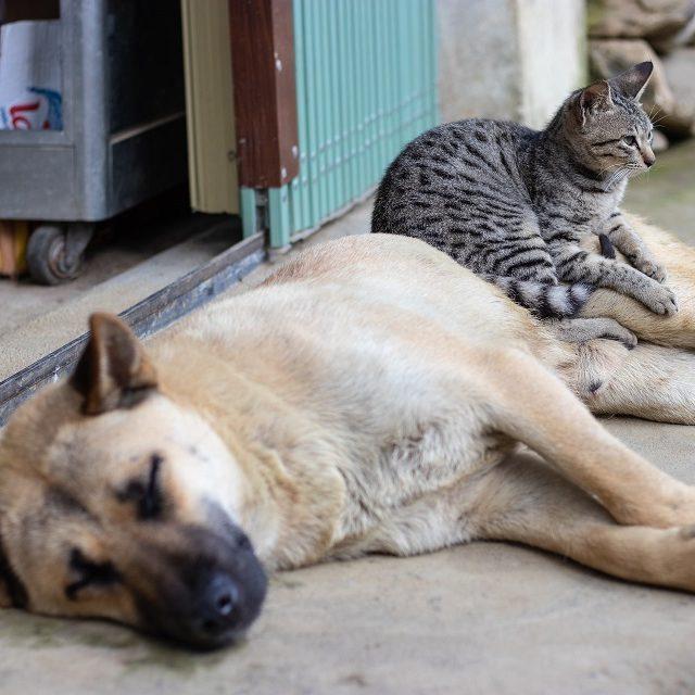 França: lei prevê fim da venda de cães e gatos em petshops