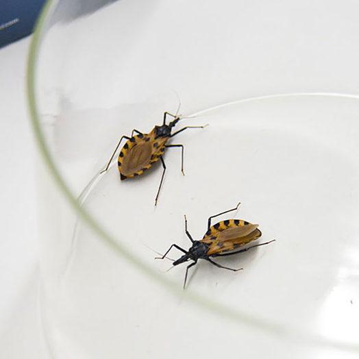 Agência lança iniciativa para combater Doença de Chagas e melhorar diagnósticos