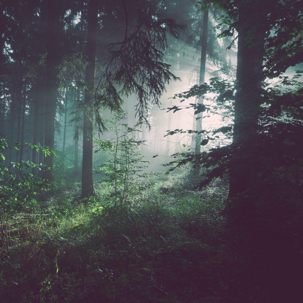 ONU abre Fórum sobre Florestas realçando urgência de proteção e conservação