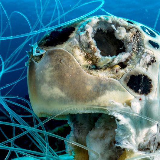 Iniciativa global combate lixo plástico marinho para limpar oceanos
