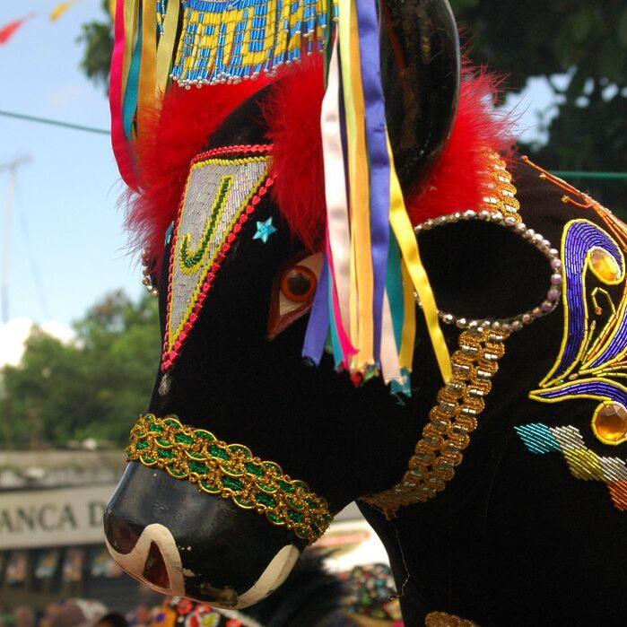 Bumba Meu Boi: manifestação cultural é celebrada no 30 de junho